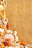 Seashell et corde photographie stock
