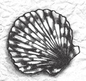 Seashell - etching. Hand drawn spiky seashell in etching style Royalty Free Stock Images