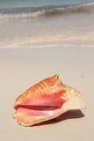 Seashell exótico Foto de archivo