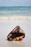 Seashell exotique sur la plage photographie stock