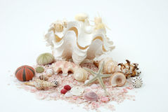 Seashell explosion Royalty Free Stock Images