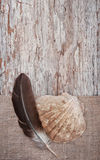 Seashell and feather on the burlap with old wooden background Stock Photo