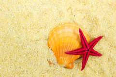 Seashell Stock Photo