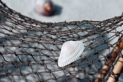 Seashell Upon Fishing Net Royalty Free Stock Photos