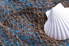 Seashell on fishing net Stock Photo