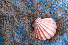 Seashell on fishing net Royalty Free Stock Photo