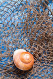 Seashell on fishing net Stock Photos