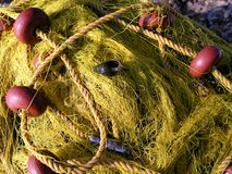 seashell fishnet Стоковое Изображение RF