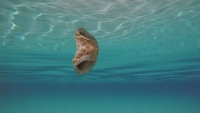 Seashell Floating On The Surface Underwater. Camera Swimming Underwater Around Seashell Floating And Mirroring Itself Under The Water Surface. Sunlight stock video