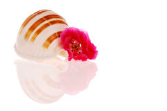 Seashell and flower Stock Photo
