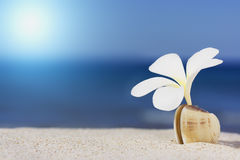 Seashell and flower on the beach Royalty Free Stock Photo