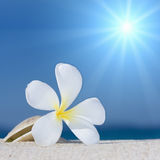 Seashell and flower on the beach Stock Photography