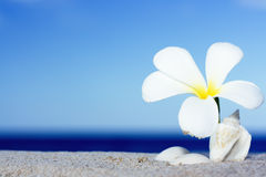 Seashell and flower on the beach royalty free stock photography