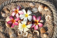 Seashell and flower by rope Stock Photo