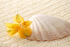 Seashell with flower (spa) Royalty Free Stock Photos
