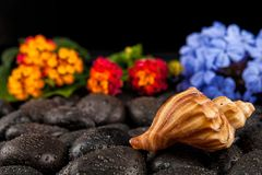 Seashell and flowers on black stone , suitable for background.  Royalty Free Stock Image