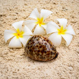 Seashell and flowers composition Stock Photo