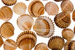 Seashell - fond photographie stock