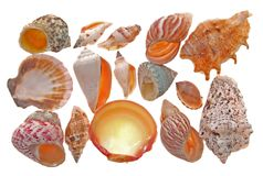 Seashell form Stock Image