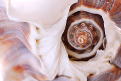 Seashell fragment Stock Image