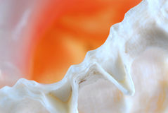 Seashell fragment Royalty Free Stock Image