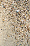 Seashell fragments on sand Royalty Free Stock Photography
