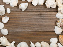 Seashell frame on brown wooden boards Stock Photo