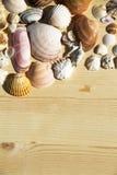 Seashell frame Royalty Free Stock Photo