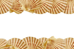 Seashell frame Stock Photography