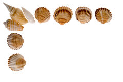 Seashell - frame on white Royalty Free Stock Photos