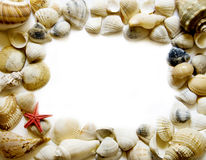 Seashell frame on white. With a lot of copy space Royalty Free Stock Photo