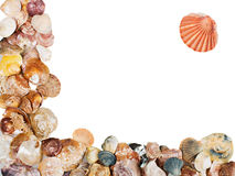 Seashell frame on white background isolated. Seashell on white background isolated frame Royalty Free Stock Photography