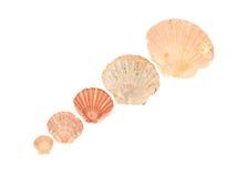 Seashell frame on white background isolated. Seashell on white background isolated frame diagonal Stock Photos