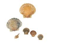 Seashell frame on white background isolated. Seashell on white background isolated frame diagonal Stock Image