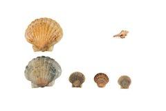 Seashell frame on white background isolated. Seashell on white background isolated frame horizontal Stock Image