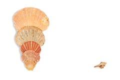 Seashell frame on white background isolated. Seashell on white background isolated frame one side Stock Photo