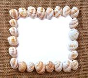 Seashell frame Royalty Free Stock Photos