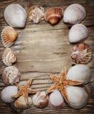 Seashell Frame Stock Photos