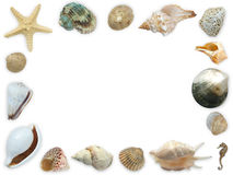 Seashell framework. Framework of assorted seashells, starfish and seahorse - with white copy space royalty free stock photos