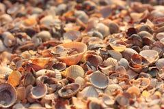 seashell Fundo natural Imagem de Stock Royalty Free