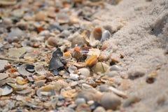 Seashell gathering Royalty Free Stock Images