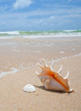 Seashell gentil sur la plage photos stock