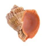 Seashell getrennt auf Weiß Lizenzfreies Stockfoto