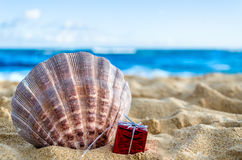 Seashell with gift on the sandy beach Stock Images