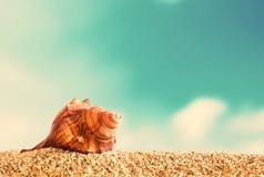 Seashell on golden beach sand royalty free stock photo
