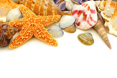 Seashell granica Obrazy Stock