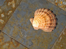 Seashell on Gray and Rust Colored Marble Stock Images
