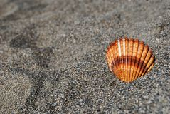 Seashell on the gray sand stock images