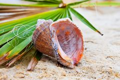 Seashell on green leaf Stock Images