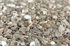 Seashell grit. Used for chickens feed and also for sidewalks Stock Image